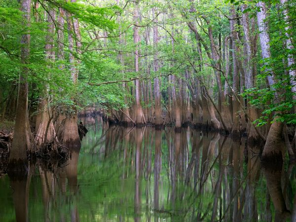 Congaree Swamp National Monument